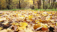 Stock Video Footage of Autumn leaves in the park_5