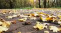 Autumn leaves in the park_6 HD Footage