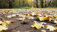 Stock Video Footage of Autumn leaves in the park_6