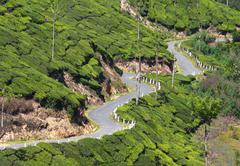 winding road between tea plantations - stock photo