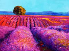 lavender fields - stock illustration