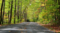Autumn leaves on roadway breezy Stock Footage