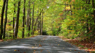 Stock Video Footage of autumn leaves on roadway breezy