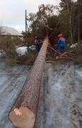 Pelastustyöntekijät pois puusta tien jälkeen hurrikaani Kuvituskuvat