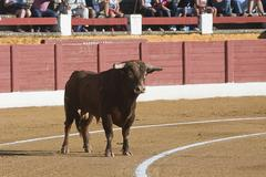 Capture of the figure of a brave bull in a bullfight Stock Photos