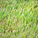 Stock Photo of grass close up