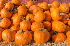 Orange pumpkins on display at the market Stock Photos