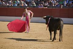 bullfight in baeza to the new values of the andalusia bullfighting schools - stock photo