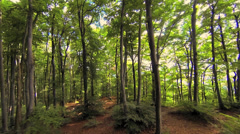 trees in forest. woods nature. forest. green fauna flora - stock footage