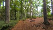 Stock Video Footage of trees in forest. woods nature. forest. green fauna flora