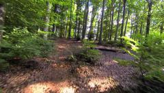 Trees in forest. woods nature. forest. green fauna flora Stock Footage