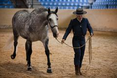 Rider and horse of pure spanish race in equestrian competition, spain Stock Photos
