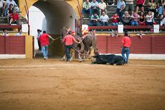 The dragging of a dead bulls carcass from the ring, spain Stock Photos