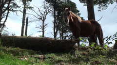 Horse in the Mountain. Asturias, Spain. Stock Footage
