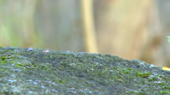 Moss growing on a rock in a forest Stock Footage