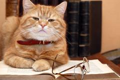 Scientist cat Stock Photos
