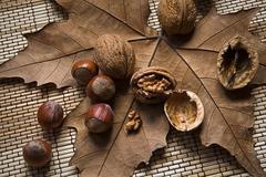 Walnuts and hazelnuts on a dry leaf Stock Photos