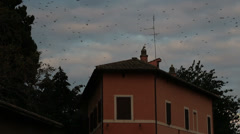 Thousands of starlings over Rome 109 Stock Footage