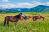 Stock Photo of horses are grazed on a meadow
