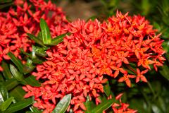 Red flower spike Stock Photos