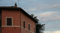 Thousands of starlings over Rome 110 Stock Footage