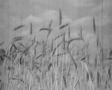 1920 - 1935 - Russian farmland Stock Footage