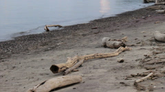 Lake Erie tide with beach covered in driftwood - stock footage