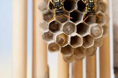 wasps on nest - stock photo