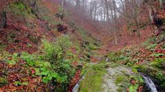 Cascade falls over mossy rocks Stock Footage