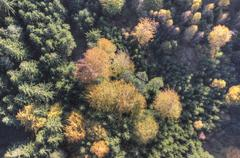 Aerial view of autumn forest Stock Photos