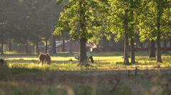 Two Horses Grazing Medium 2 Stock Footage