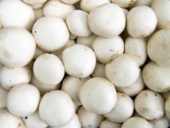 champignons - stock photo
