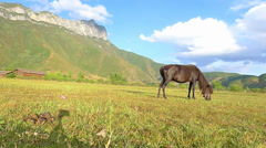 Black horse eating grass on the pasture, with the beautiful Gemu holy mountain Stock Footage