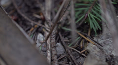 A slow motion tracking shot of the forest Stock Footage