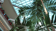 "Stock Video Footage of Baltimore 029HD Inner Harbor, inside ""The Gallery"", Atrium with Palm"