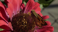 butterfly  on a flower - stock footage