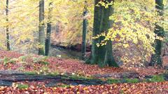 Autumn pond. Stock Footage