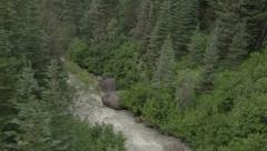 Forest river aerial - stock footage