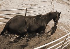horse in aqua walker - stock photo