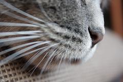 Nose kitty's Stock Photos