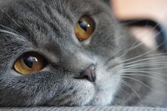 Kitty's eyes - stock photo