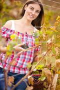 Women working in vineyards Stock Photos
