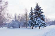 Stock Photo of snowy two pine trees