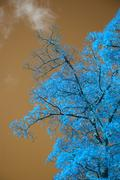 Stunning unusual false color tree and sky landscape Stock Photos