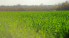 Close up of fresh thick grass in sunlight Stock Footage