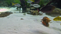 Underwater Habitat with Stingrays Stock Footage