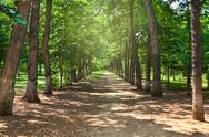 Stock Photo of park allee summer trees