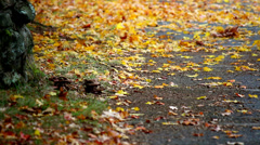 Yellow autumn leaves blow across ground Stock Footage
