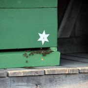 worker bees on a hive - stock photo