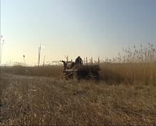 Reed harvest in winter, Kinderdijk, The Netherlands Stock Footage